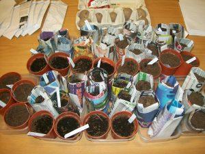 Seeds in paper pots