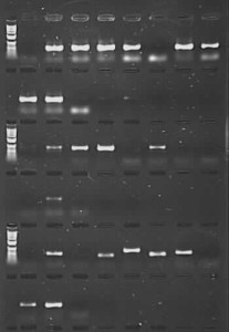 PCR amplification of herbarium DNA using TBT-PAR additive