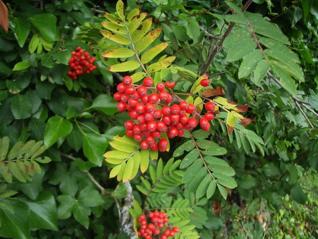 Garden Bush: What Will Scotland's Favourite Plant Be?