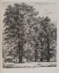 Wych Elms, Renfrewshire. Plate from Sylva Britannica; or, portraits of forest trees written and illustrated by Jacob George Strutt (1790-1864) published in folio format, 1822. Copy held by the library at the Royal Botanic Garden Edinburgh. Photographed by Lynsey Wilson.