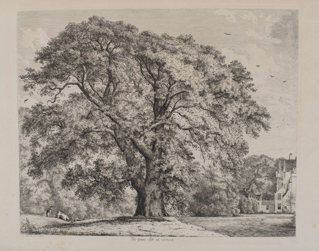 The Great Ash at Carnock, Plate from Sylva Britannica; or, portraits of forest trees written and illustrated by Jacob George Strutt (1790-1864) published in folio format, 1822. Copy held by the library at the Royal Botanic Garden Edinburgh. Photographed by Lynsey Wilson.