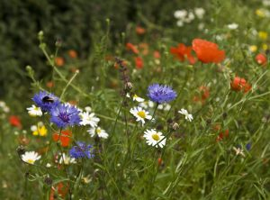 Wild_Flower_35_Biodiversity
