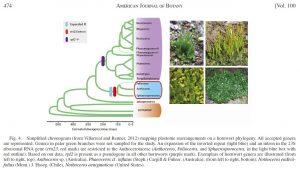 Hornwort backbone phylogeny
