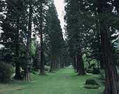 Redwwod avenue at Benmore Botanic Garden