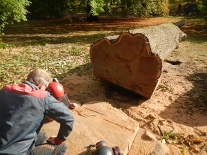 Counting annual growth rings to establish the exact age of the tree.