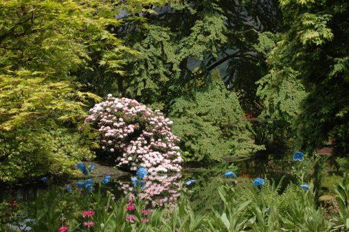Pond and Arboretum