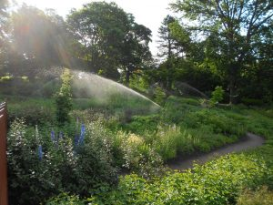 Irrigation in the Biodiversity Garden. Photo by Toby Garn