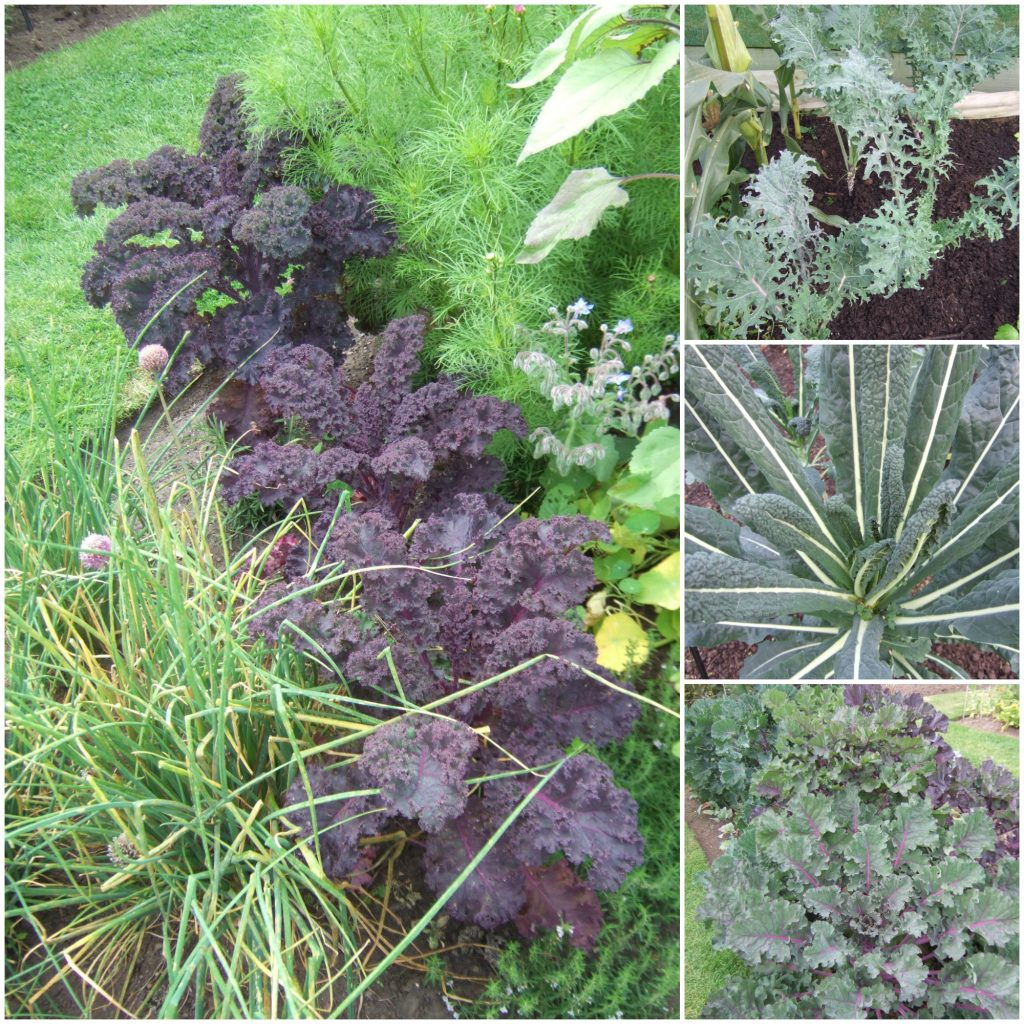 Kale 2 Collage