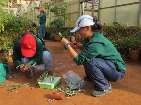 Two staff from the RBGE field station in Lijiang, China, taking cuttings on Kunming horticulture course.