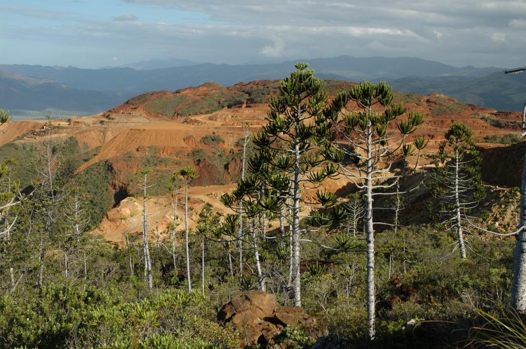 Mining destruction of Conifer habitats