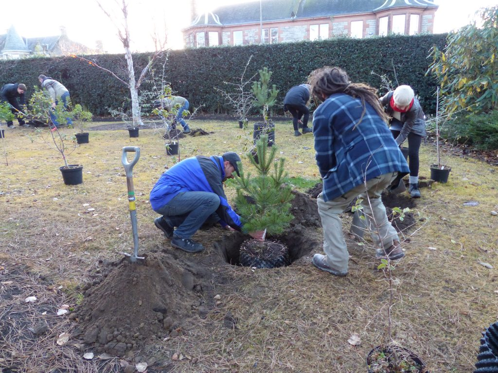 Checking the planting depth on a Pinus syvestris grown from seed collected in Turkey