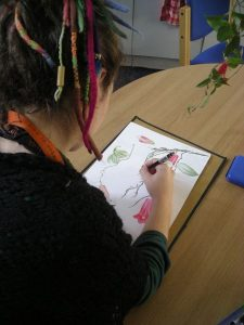 Isik working on Lapageria rosea illustration