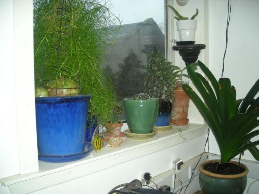 Petes windowsill