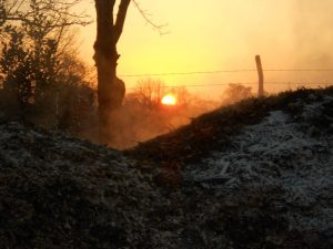 Wood chip heap steaming at sunset Jan 2012. Photo by Tony Garn