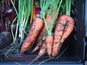 5. Carrots