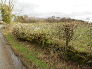 Hedge flail cut