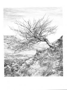 Rowan-Tree lores