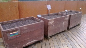 The carrot trial on the decking at the John Hope Gateway Building just after sowing on 22nd April 2014.