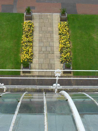 Begonia 'Non Stop Yellow'