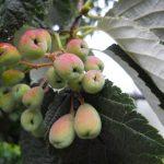 Embedding Repository Items in Botanics Stories