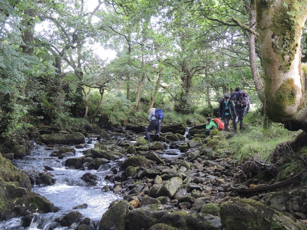 Bryologists searching Black Burn