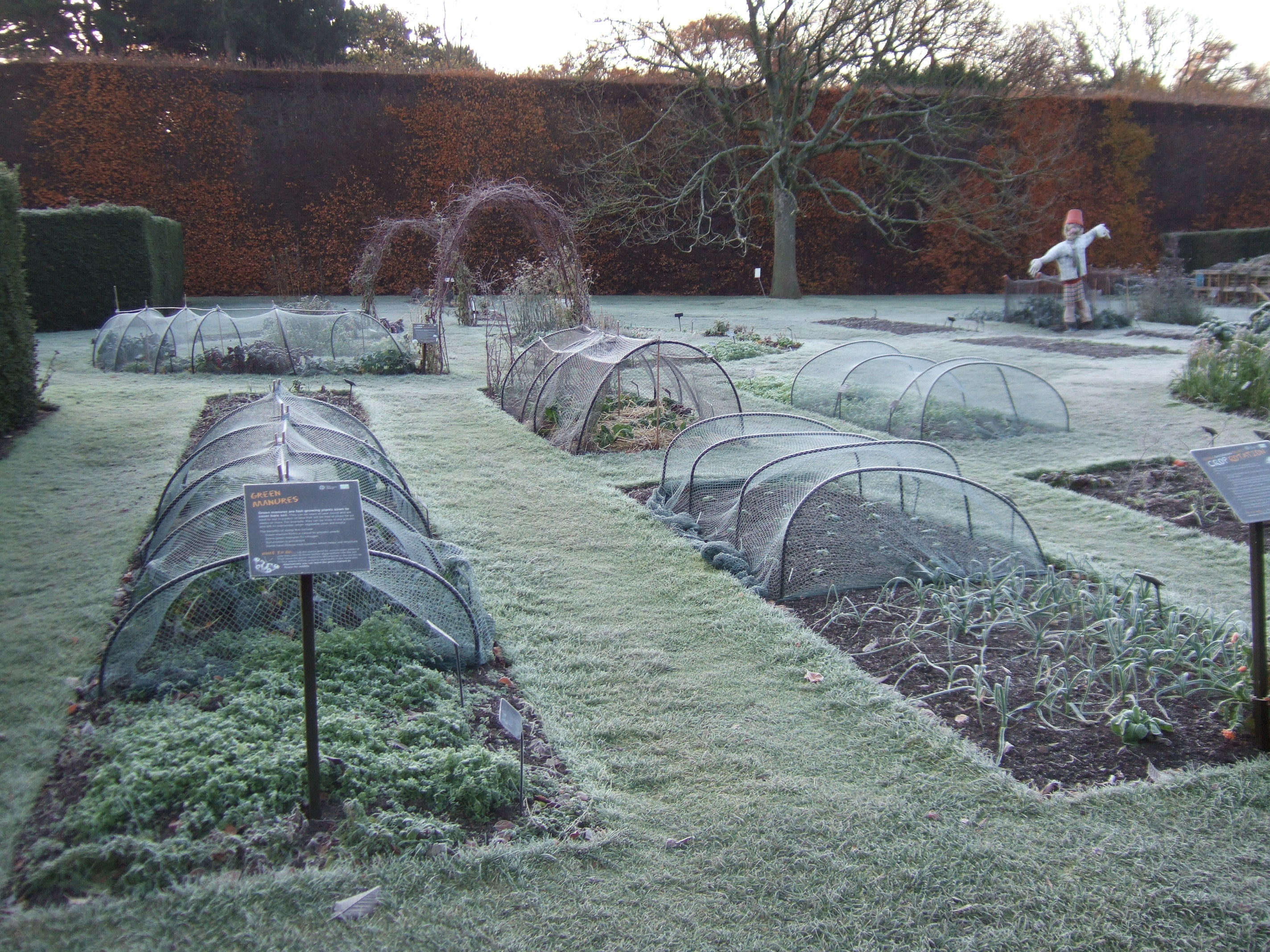 what to do in your fruit and vegetable garden in scotland