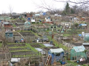 Allotments are the providers of food and knowledge