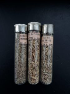 Seed bottles from the vasculum