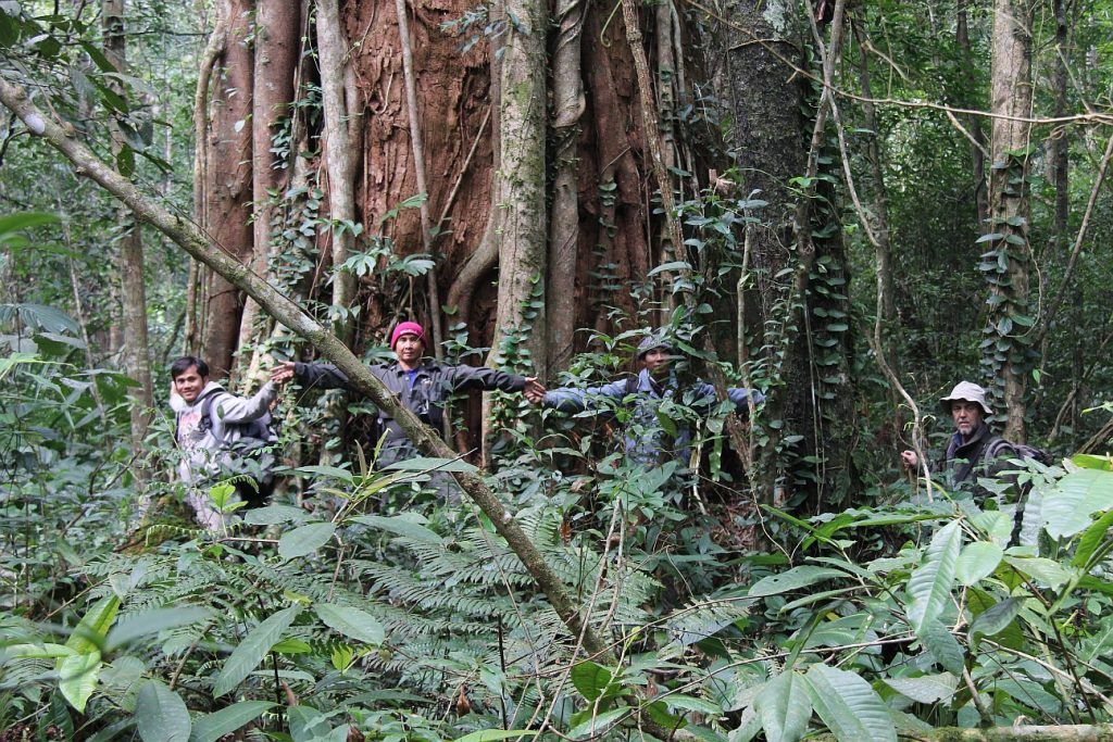 One of the largest Glyptostrobus trees recently discovered in Lao PDR