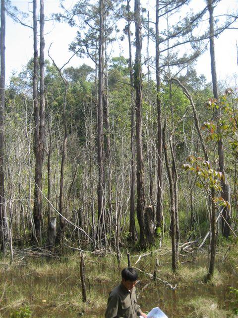 Swamp Cypress 2009 027