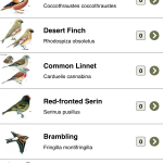 Birds of Peramagroon: First of a series of guides?