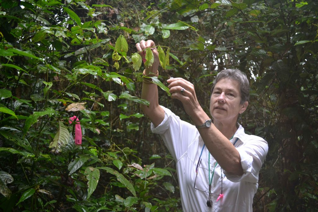 Lissy Coley collecting Inga in Ecuador