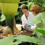 Michelle and Frieda collecting material for DNA analysis