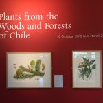 Plants from the Woods and Forests of Chile