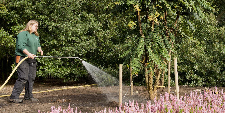 9-M-napaulensis-watering