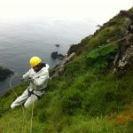 Laying ropes for Giant Rhubarb on sea cliffs and high sea cliffs in Ireland, Smyth et al. 2013.