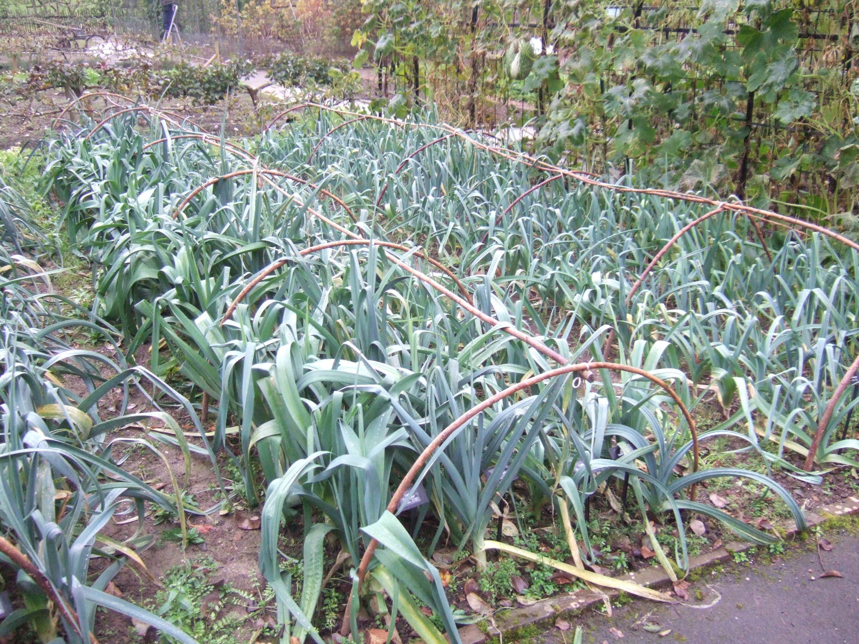 Gardeners Kitchen Edible Gardening Project Botanics Stories