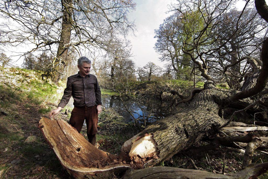 Dalkeith oak