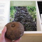 The dodo tree and other stories