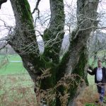 Another Sprig of Hope For Ash Tree? BIOCHAR ...