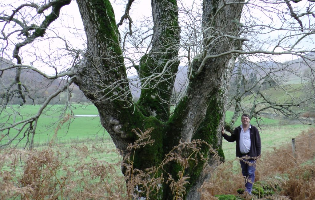 Photo: Ancient Pollarded Ash near Killin (and the Author)