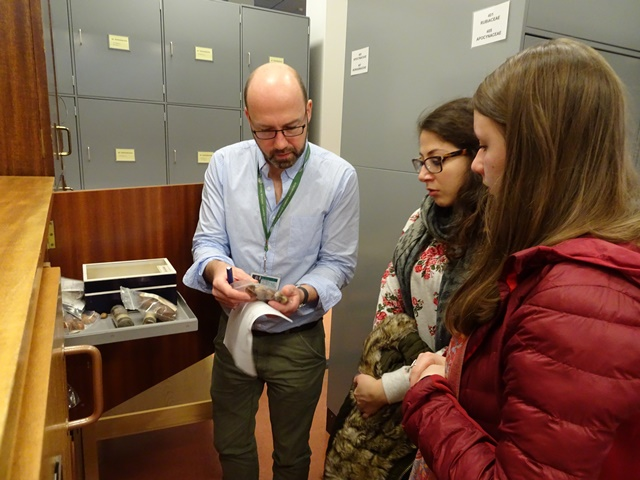 Examining Sapotaceae fruits and seeds in the Herbarium with Sapotaceae researcher Peter Wilkie.