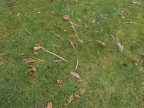 Winter debris on a lawn