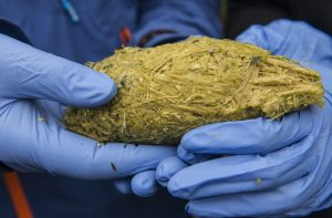 Scats from giant panda will be collected and tested to work out what the panda has eaten