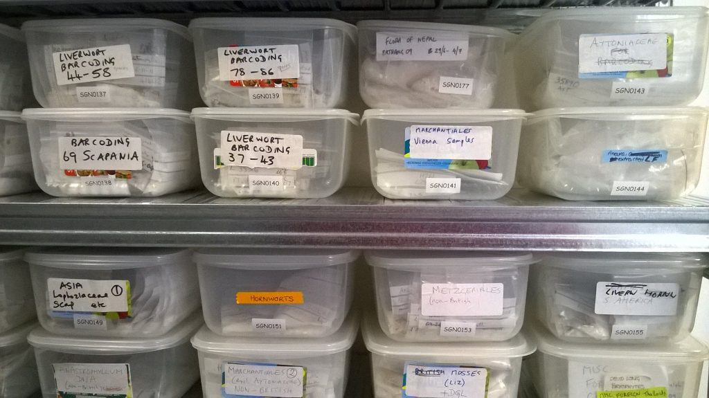 Boxes of silica-dried liverworts in RBGE's tissue storage room