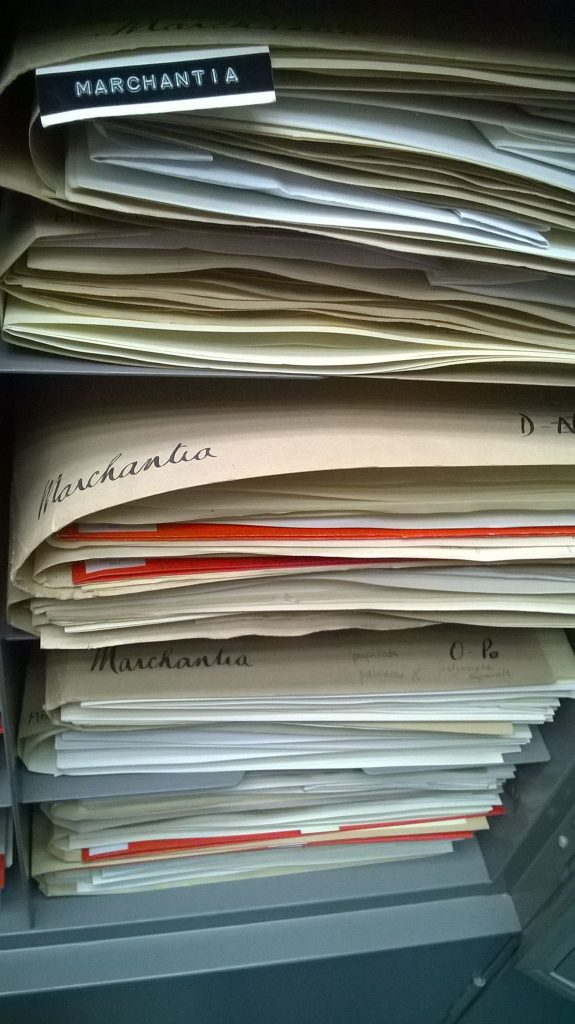 Some of the herbarium collections of Marchantia held in the RBGE herbarium