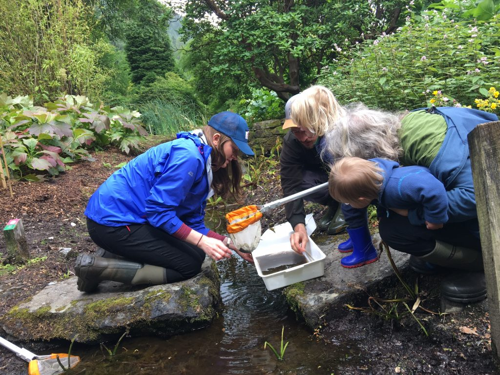 Pond dipping at Benmore BioBlitz.