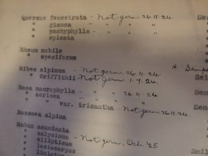 Quercus species listing in Cave's 1924 seed lists with annotations about what germinated.