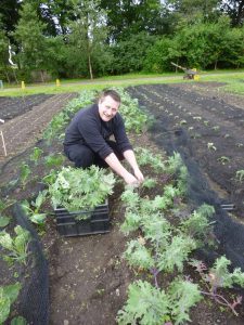 Head Chef Ben Harrison harvesting kale