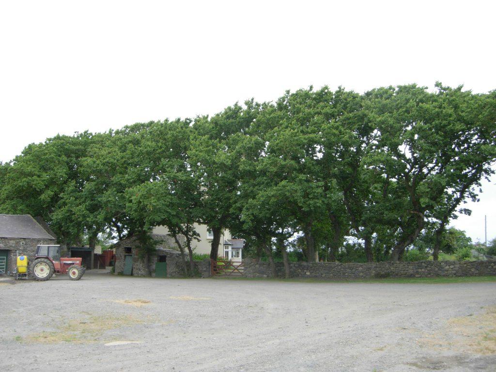 Dutch elm disease botanics stories for West elm long island